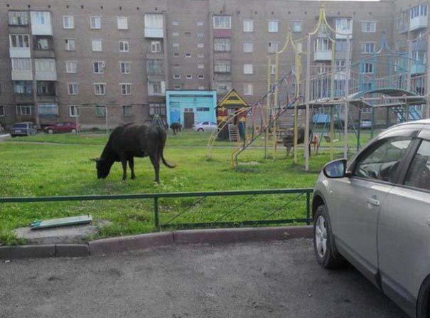 Εν τω μεταξύ, στη Ρωσία... #54 (15)