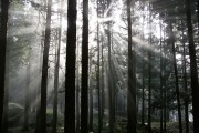 Φάντασμα στο δάσος