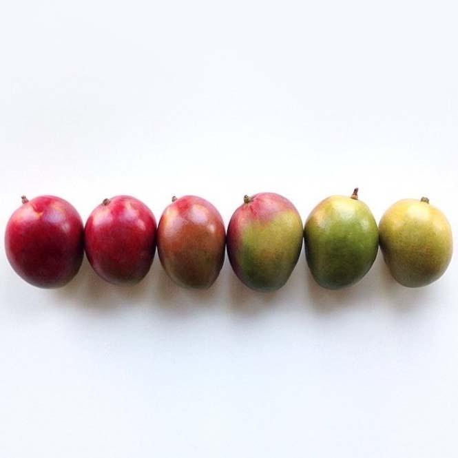 Φωτογράφος μετατρέπει τα τρόφιμα σε τέχνη (6)