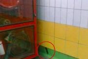 Γάτα είχε εγκλωβιστεί πίσω από τοίχο στο Μετρό για 5 χρόνια (1)
