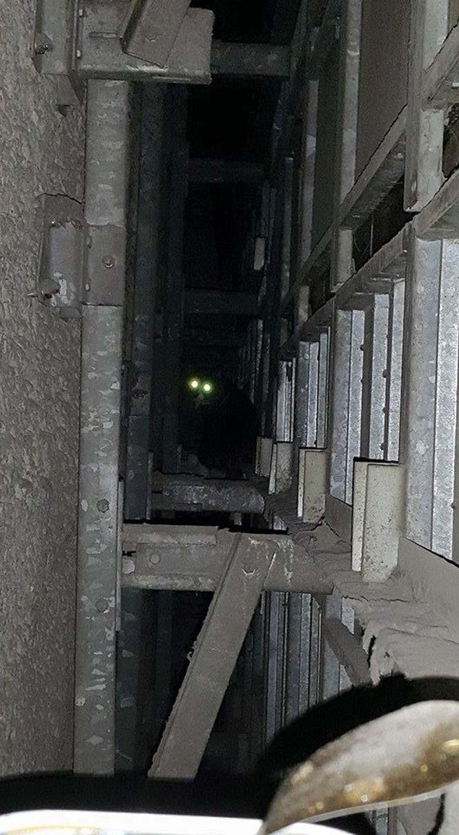 Γάτα είχε εγκλωβιστεί πίσω από τοίχο στο Μετρό για 5 χρόνια (5)
