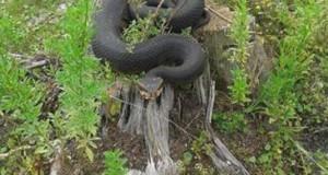 Γιατί δεν πρέπει να παίζεις με ένα δηλητηριώδες φίδι