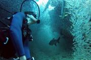 Κολυμπώντας με ένα εκατομμύριο ψάρια