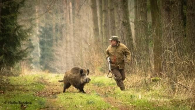 Όταν ο κυνηγός γίνεται κυνηγημένος (3)