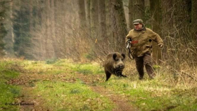 Όταν ο κυνηγός γίνεται κυνηγημένος (4)
