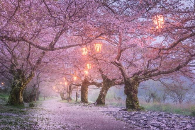 Η Οσάκα της Ιαπωνίας σε μια εικόνα σαν παραμύθι   Φωτογραφία της ημέρας