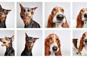 Απίθανοι σκύλοι ποζάρουν σε φωτογραφικό θάλαμο