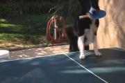 Σκύλος που είναι άσσος στο Ping Pong