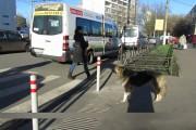 Τα ζώα στην Ρωσία ξέρουν πως να περνούν τον δρόμο