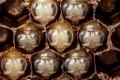 Οι 21 πρώτες μέρες στη ζωή μιας μέλισσας σε 60 δευτερόλεπτα (Video)