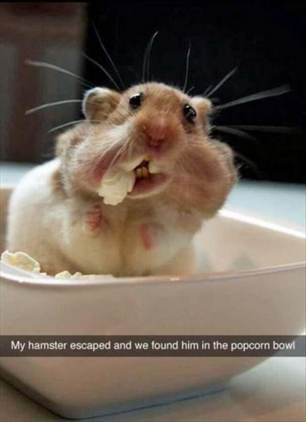 Αστείες Φωτογραφίες #580 (10)