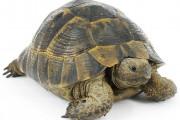 Το εσωτερικό μιας χελώνας (1)