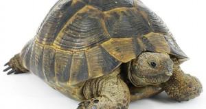 Πως είναι το εσωτερικό μιας χελώνας