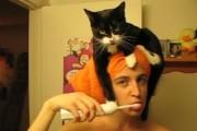 Κάπως έτσι είναι η καθημερινότητα όταν ζεις με μια γάτα...