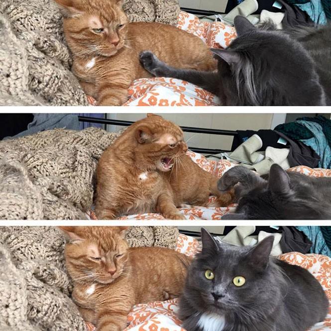 Η στιγμή που συνειδητοποιείς πως ο σύντροφος σου είναι τρελός | Φωτογραφία της ημέρας