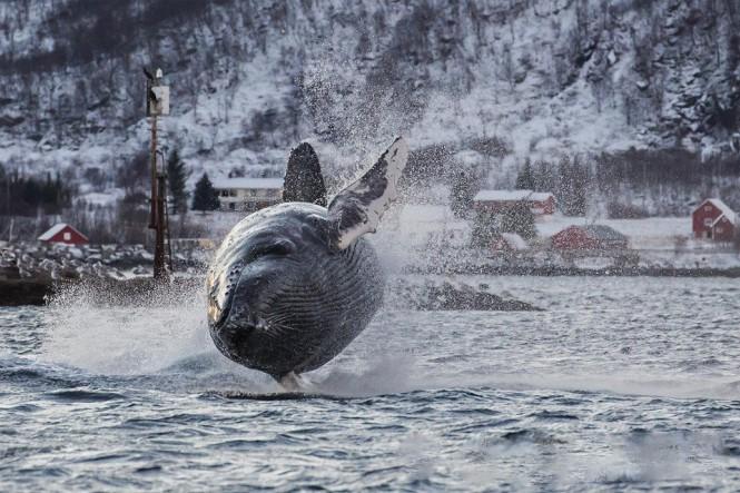 Φωτογραφίζοντας μια φάλαινα την κατάλληλη στιγμή | Φωτογραφία της ημέρας