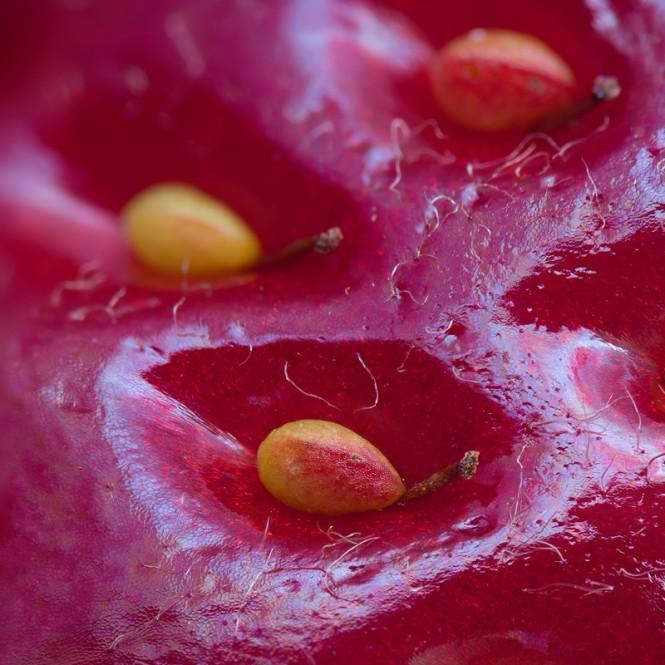 Η επιφάνεια μιας φράουλας | Φωτογραφία της ημέρας