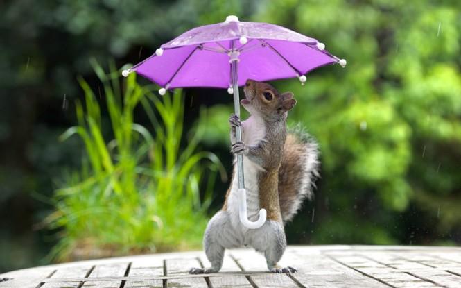 Singin' in the rain | Φωτογραφία της ημέρας