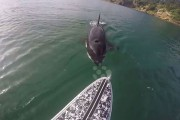 Σπάνια στενή επαφή με μια φάλαινα δολοφόνο
