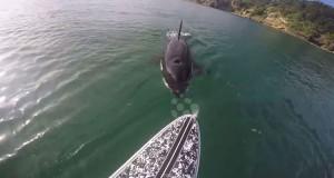 Σπάνια στενή επαφή με μια φάλαινα δολοφόνο (Video)