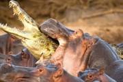 Τα 10 πιο φονικά ζώα στον πλανήτη