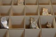 9 γάτες, 20 κουτιά