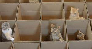 9 γάτες, 20 κουτιά (Video)