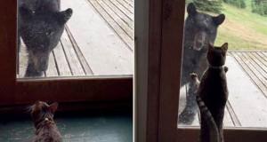 Αρκούδα προσπαθεί να εισβάλει σε σπίτι αλλά έρχεται αντιμέτωπη με την γάτα της οικογένειας (Video)