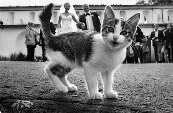 Αστείες φωτογραφίες γάμων #48 (6)