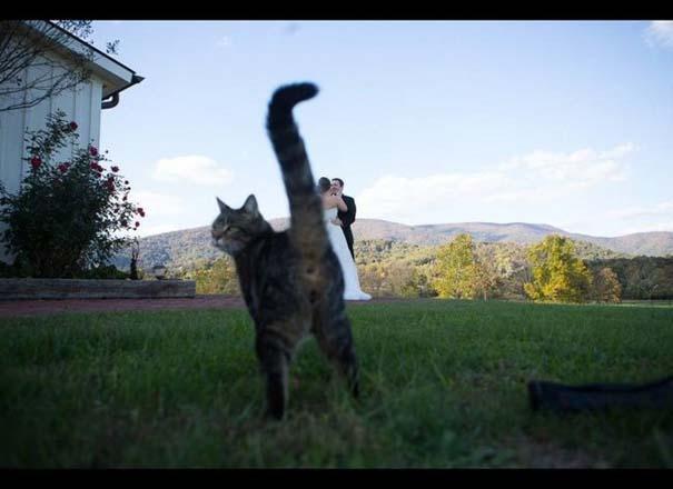 Αστείες φωτογραφίες γάμων #48 (7)