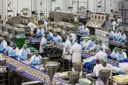 Εργοστάσιο που παράγει 3 εκατομμύρια σάντουιτς την εβδομάδα (1)