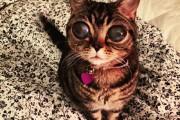 Γάτα με μάτια εξωγήινου (1)