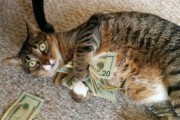 Γάτες που... κάνουν τα δικά τους! #19 (1)