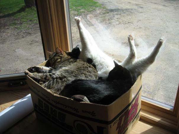 Γάτες που... κάνουν τα δικά τους! #19 (4)