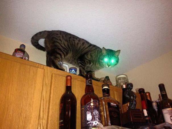 Γάτες που... κάνουν τα δικά τους! #19 (9)