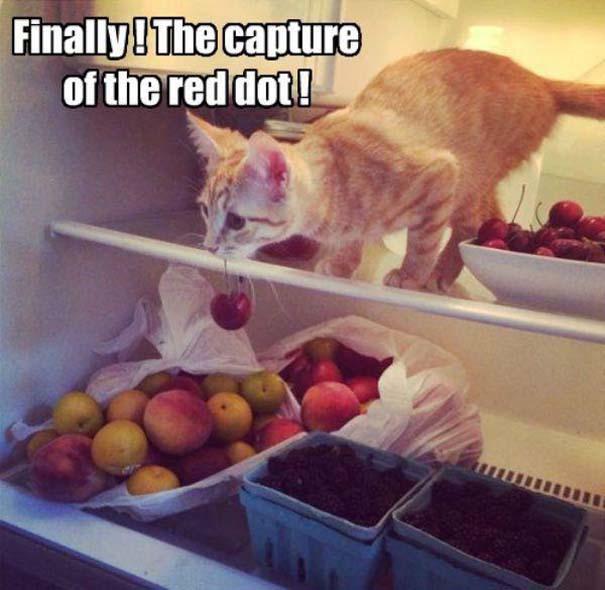 Γάτες που... κάνουν τα δικά τους! #19 (14)