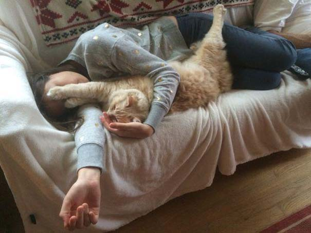 Γάτες που... κάνουν τα δικά τους! #19 (16)