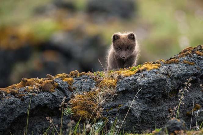 Η Ισλανδία σε μαγευτικές φωτογραφίες (30)