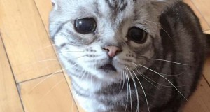 Ίσως η πιο λυπημένη γάτα στο Internet