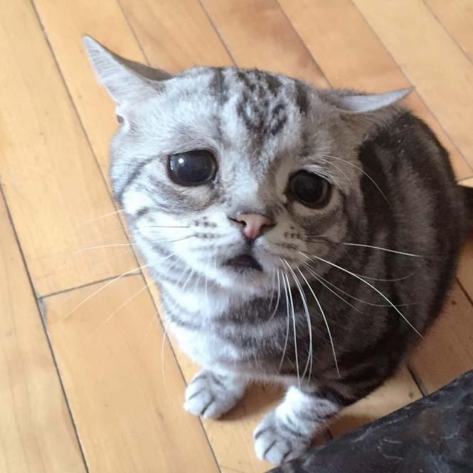Ίσως η πιο λυπημένη γάτα (1)