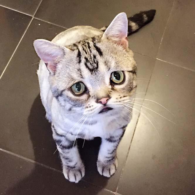 Ίσως η πιο λυπημένη γάτα (2)