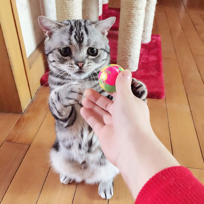 Ίσως η πιο λυπημένη γάτα (3)