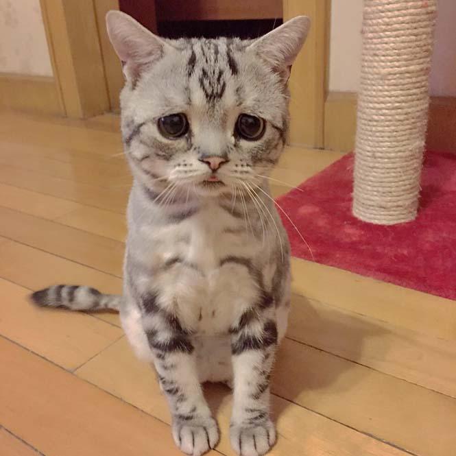 Ίσως η πιο λυπημένη γάτα (5)