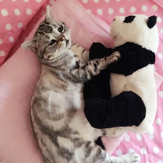 Ίσως η πιο λυπημένη γάτα (8)