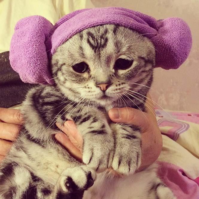 Ίσως η πιο λυπημένη γάτα (9)