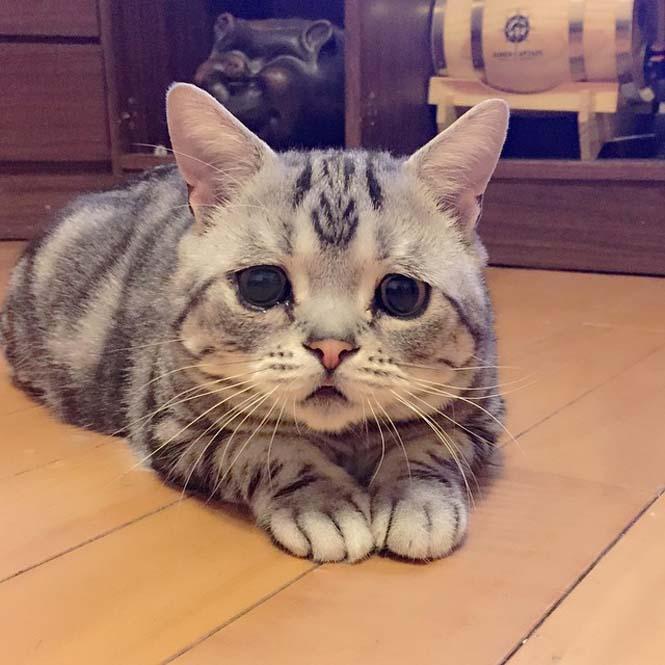 Ίσως η πιο λυπημένη γάτα (13)