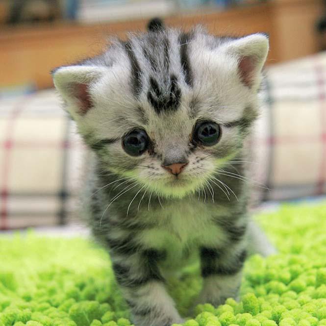Ίσως η πιο λυπημένη γάτα (14)