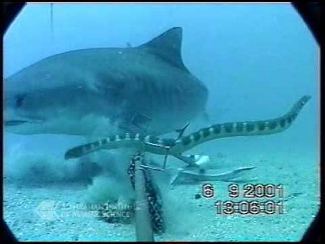 Καρχαρίας εναντίον φιδιού