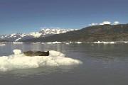 Κι ενώ μια φώκια χαλάρωνε πάνω σε ένα παγόβουνο...