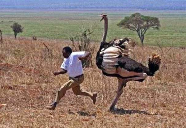 Μόνο στην Αφρική #3 (8)